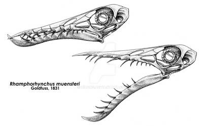 The Wicked Teeth of Rhamphorhynchus