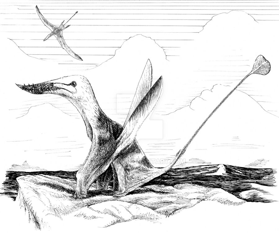 White-headed Prowbeak by Qilong