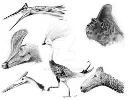 Strange Crests of Paleo
