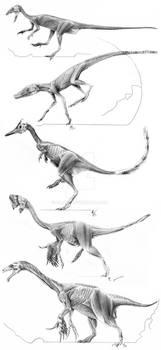 Archosaur Muscle Studies