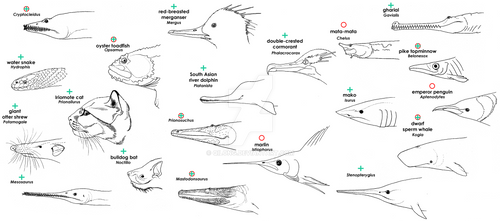 Piscivores - Extant and Extinct