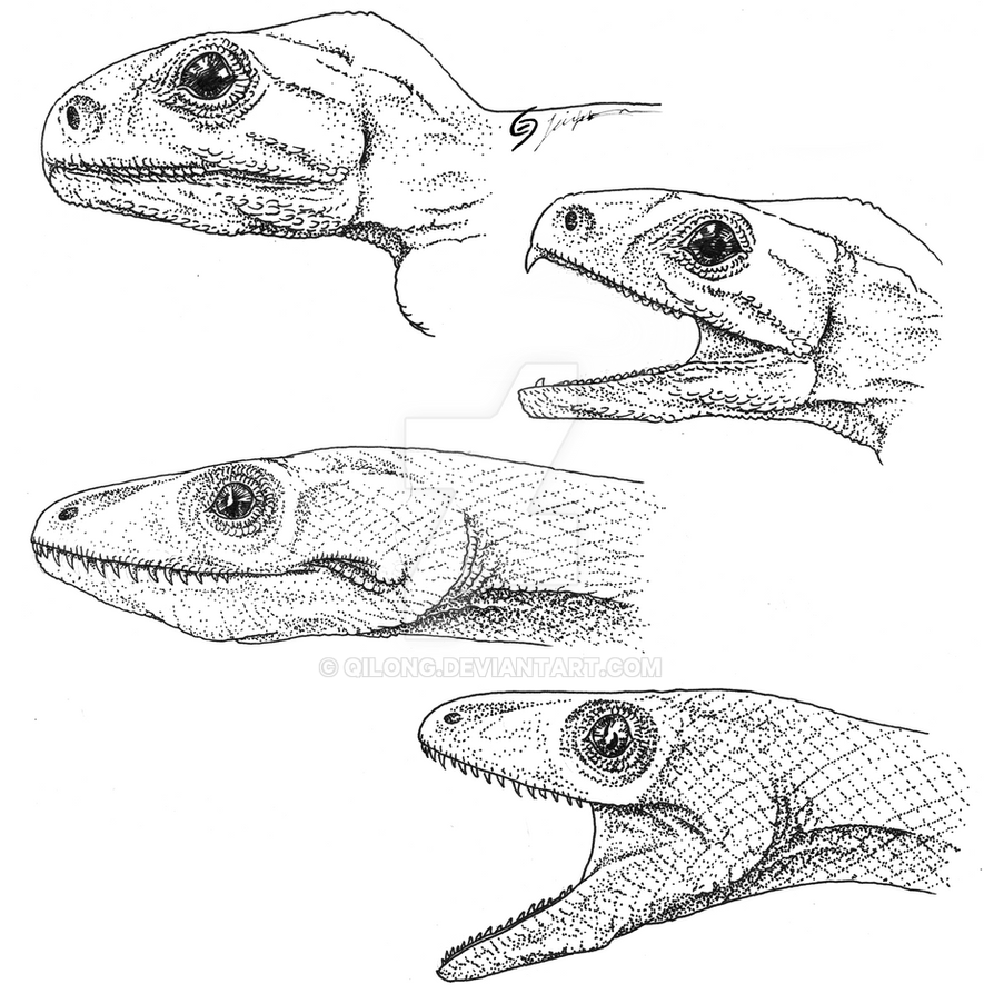 Lizards Without Lips By Qilong On Deviantart
