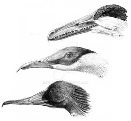 Toothed Birds