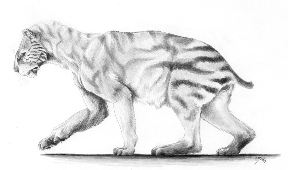 Xenosmilus, the Panda Cat