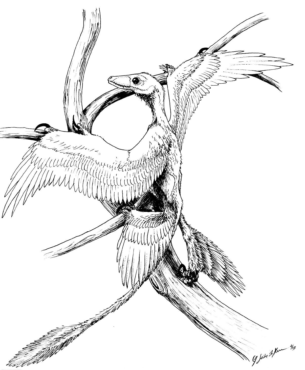 microraptor coloring pages - photo#10