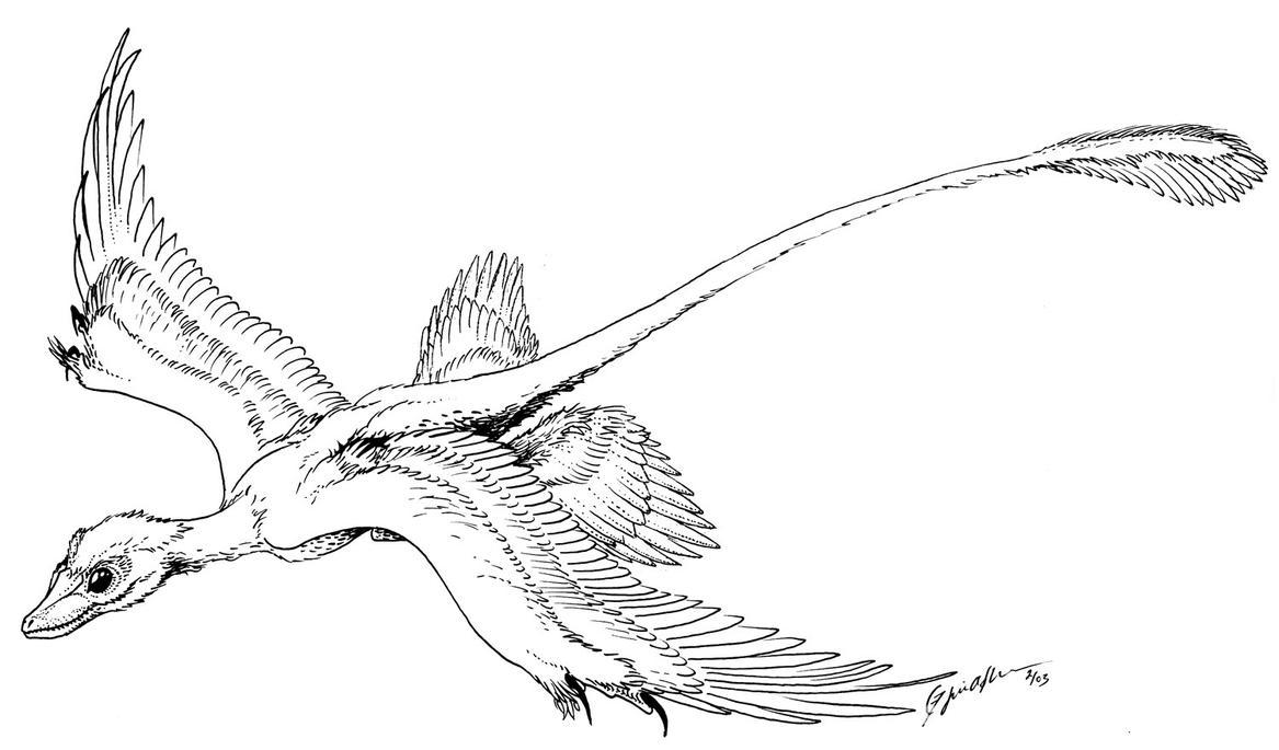 microraptor gliding by qilong