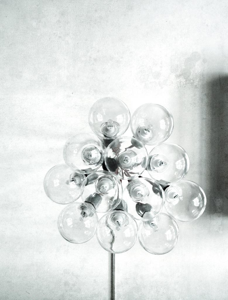 Bloom by BlkBtrfli8