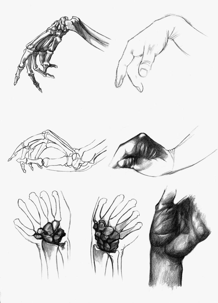 Them hands - Anatomy practice by Daandric on DeviantArt