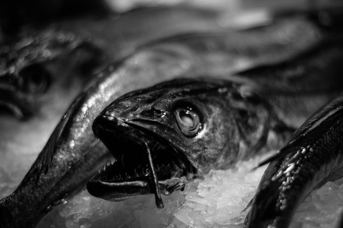 Fish by LukaStevens