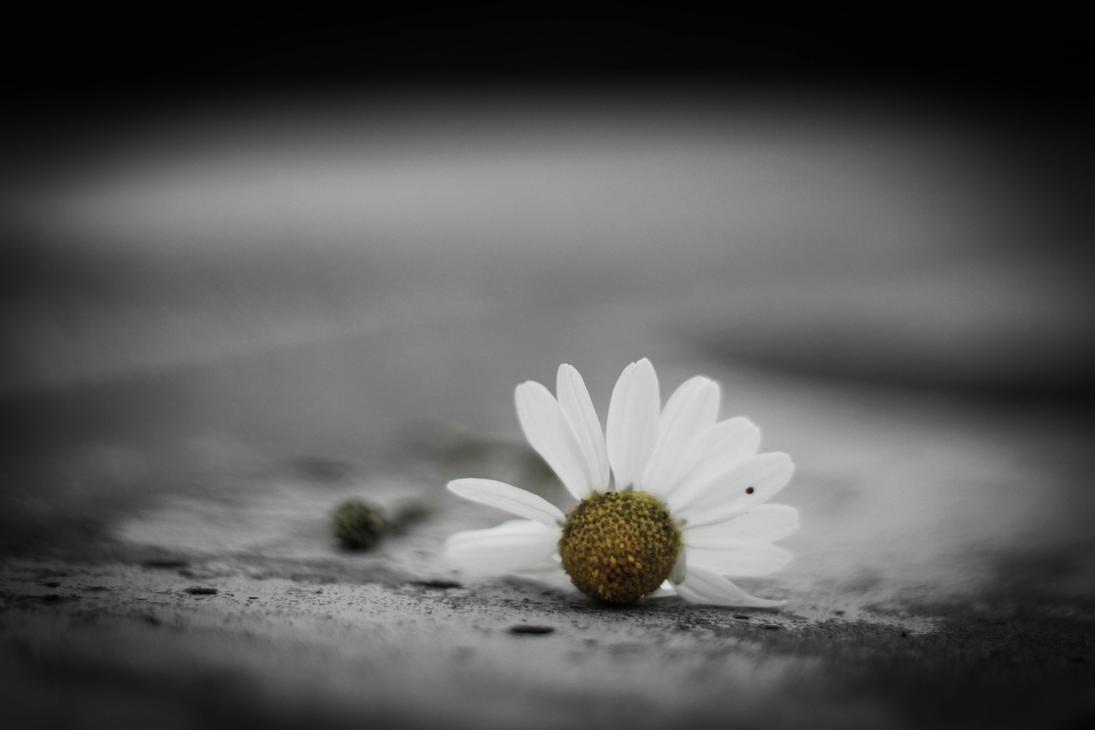 Flower by LukaStevens