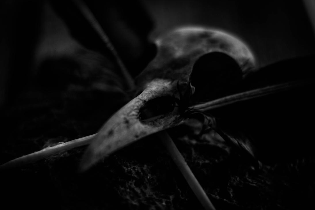 Skull by LukaStevens