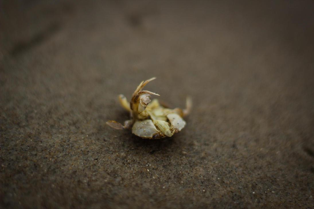 Crab by LukaStevens