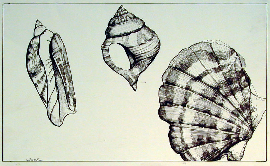 Contour Line Drawing Shell : Contour of sea shells by sunflowerwithpower on deviantart