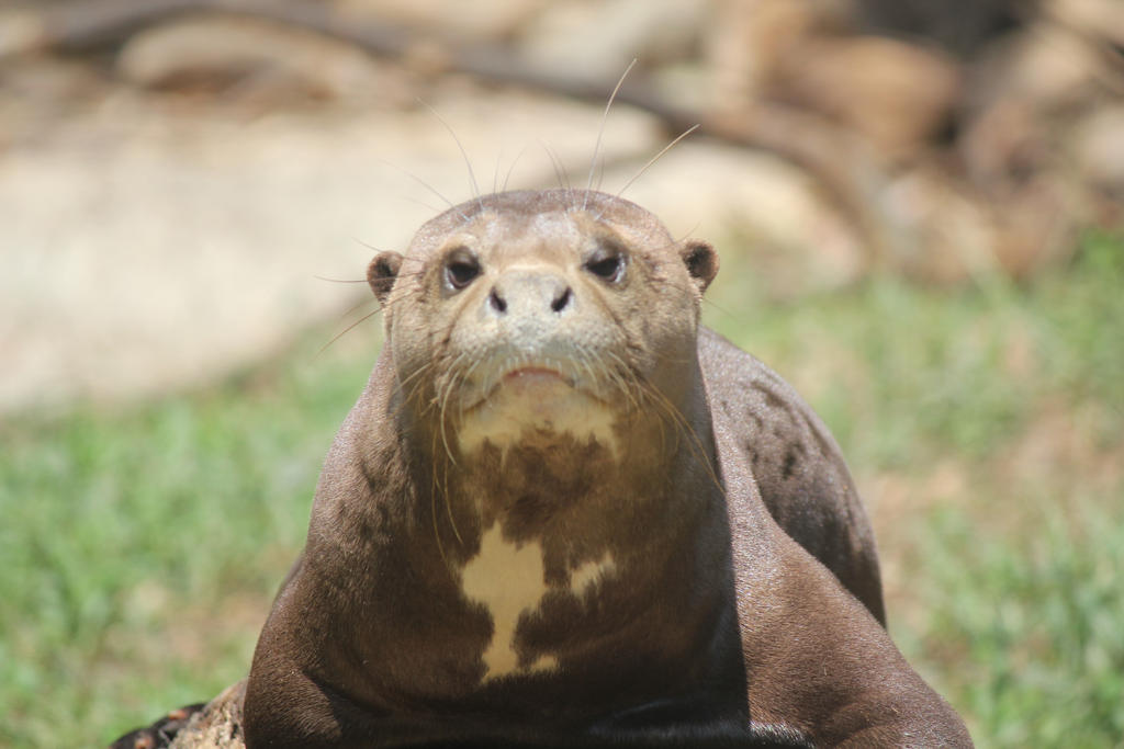 Im not like the otters by Tinkerbell54011