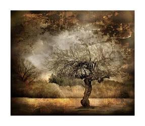 Magic trees of broceliande III by ChristineAmat