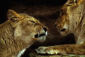 Felins II by ChristineAmat