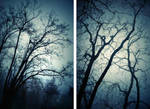 The forest blue winter by ChristineAmat