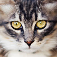 Cat II by ChristineAmat