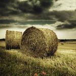 Straw landscape