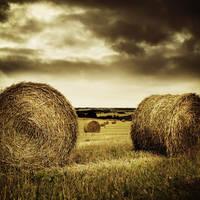 Straw landscape II by ChristineAmat