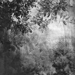 sull'ombra delle rondini