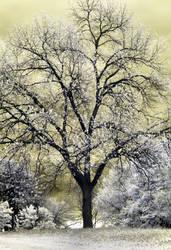 OtherWorld Tree 1A by camera-buff