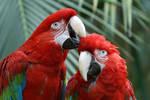 Macaw 006