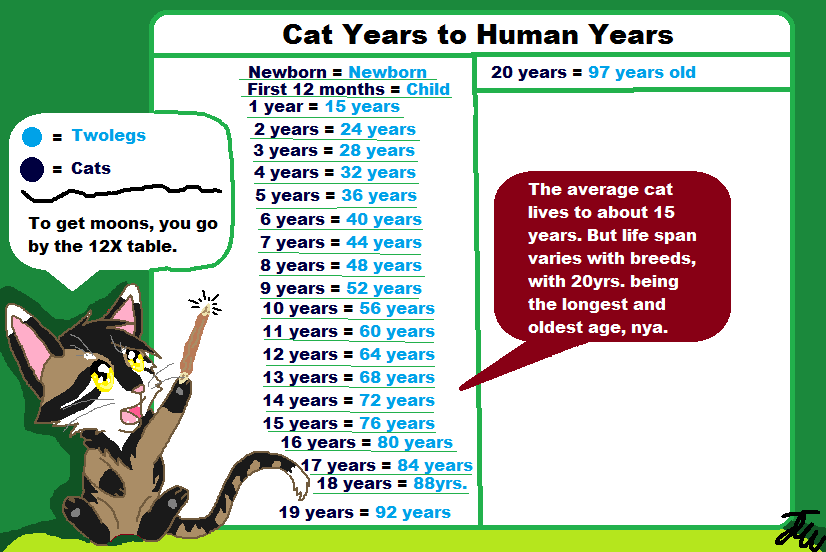 Fun Facts With Northwind ll Cat Aging by AriaSnow on DeviantArt
