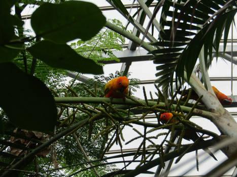 Happy Lil Parrots