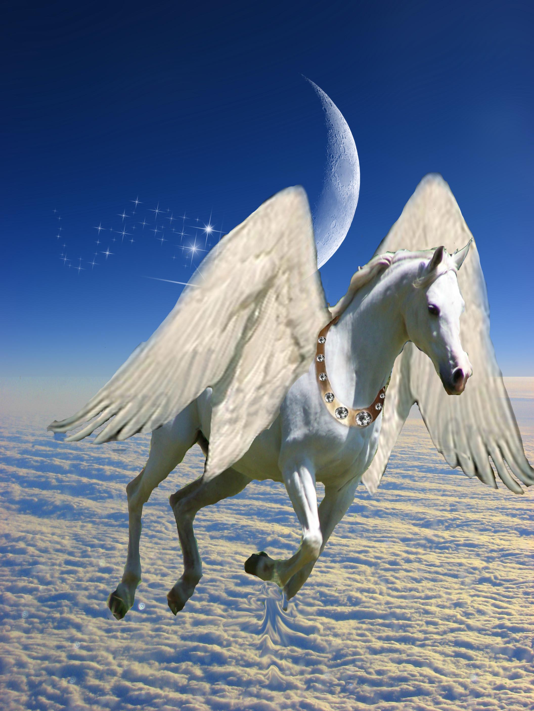 pegasus by white raven7 on deviantart