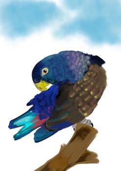 bronze-winged parrot