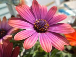 Purple Beauty by xXNeon-HeartXx