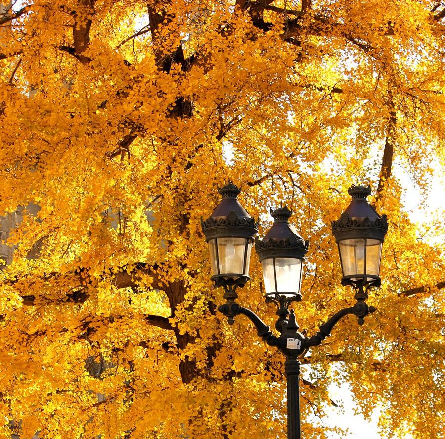 Golden leaves by Misgaeroten