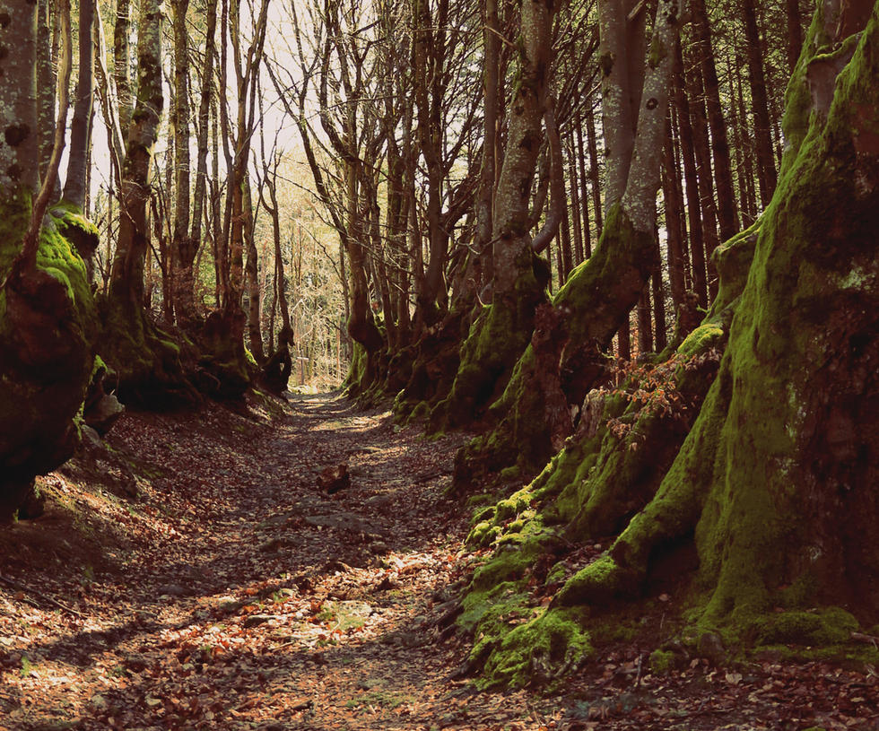 Path of the Giants by Ornicar-photographie