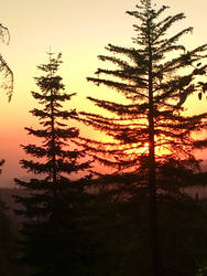 Sunset Over Sequoias