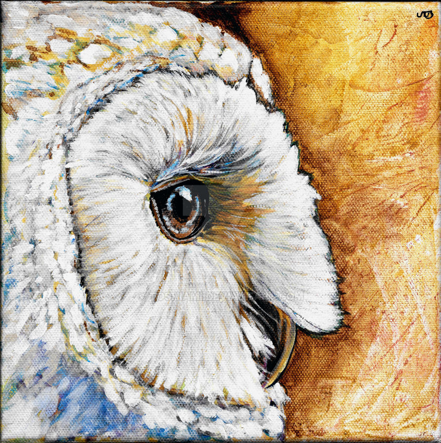 Barn Owl by toshiami