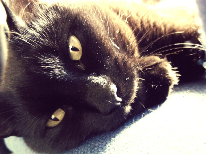 My cat, Jade. by mdw-rock
