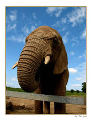 elephant by marsup