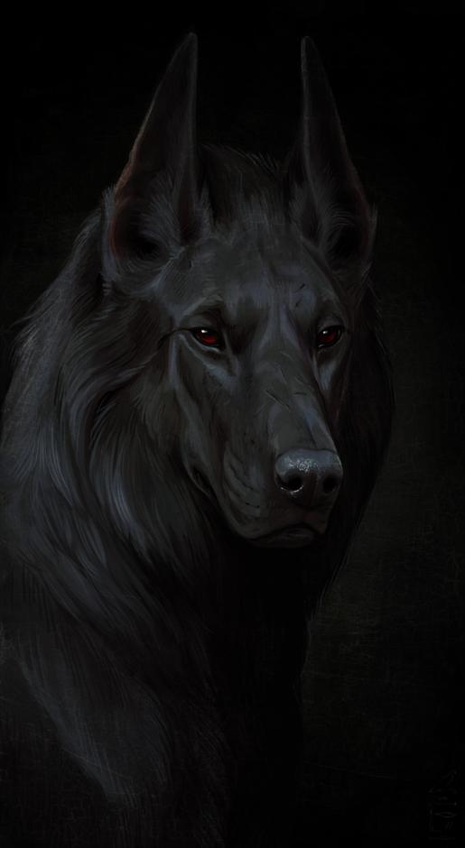 black dog by Atenebris