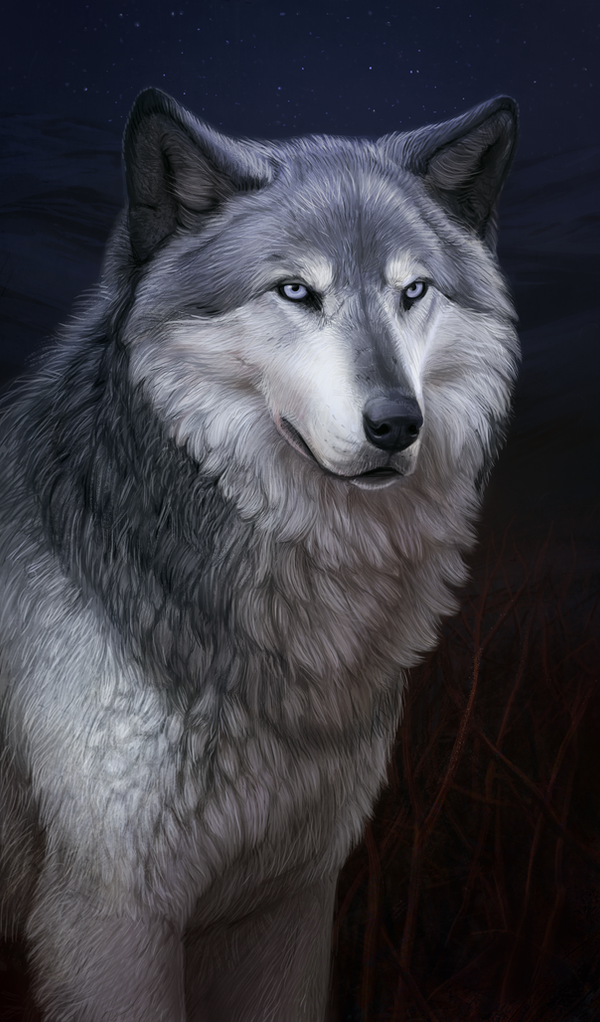 Old wolf by Atenebris