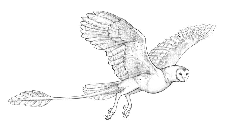 Owldragon by Atenebris