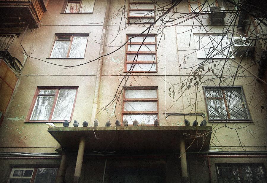 http://fc06.deviantart.net/fs71/i/2011/126/f/6/pigeons_by_bmc_t-d3fpath.png