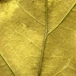 Leaf Texture in Gold