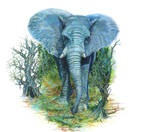 Blue elephant by Vincik