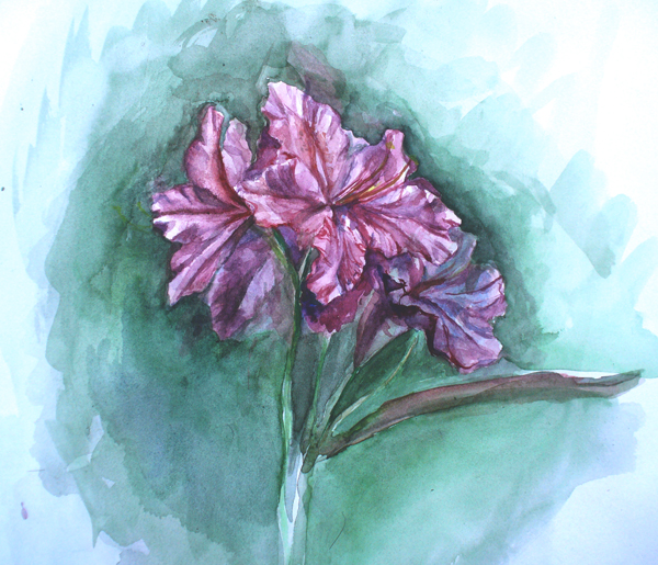 Rhododendron by Vincik