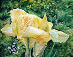 Iris Watercolour by Vincik
