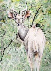 Antelope by Vincik