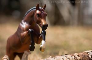 Runaway by TR-Ranch