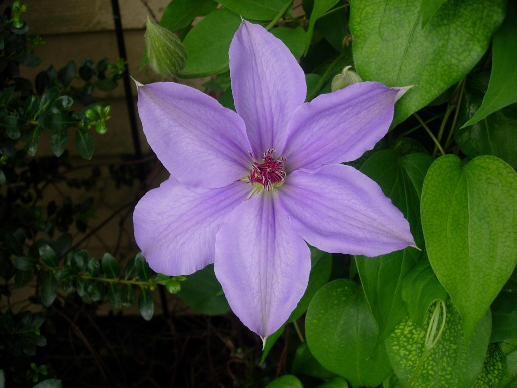 Big Purple Flower by JPizza on DeviantArt