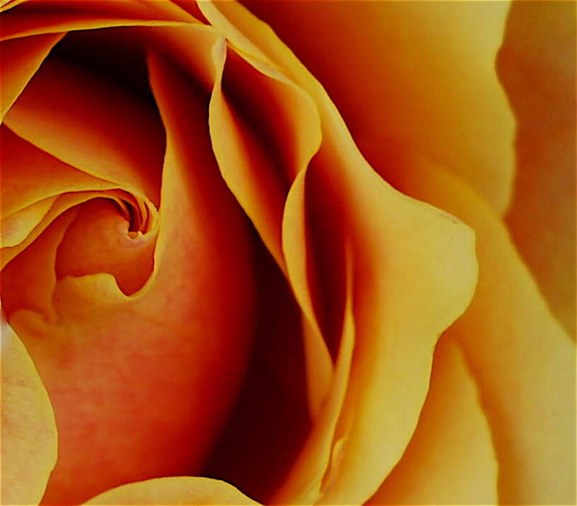 Orange Petal Folds by LoraDoerfer